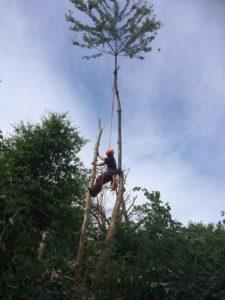 MS-Skovservice.dk træfældning, topkapning, beskæring, hækklipning, rodfræsning